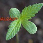 acelerar-crecimiento-marihuana