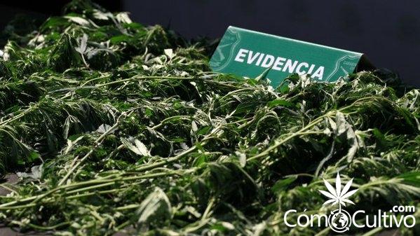 marihuana-incautar-agenda-corta-antidelincuencia