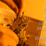 video-paso-como-cosechar-marihuana-cannabis
