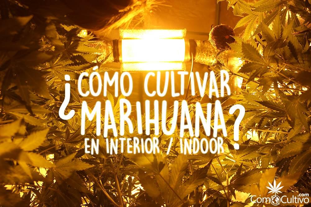 como-cultivar-marihuana-indoor-interior
