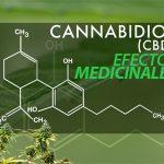 cbd-cannabidiol-efectos-medicinales