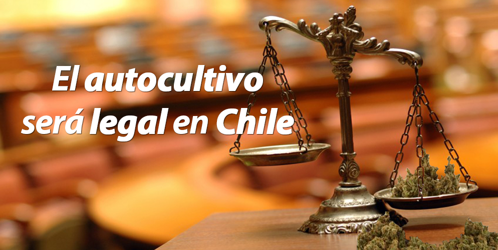 autocultivo-legal-chile-votacion-comision-salud