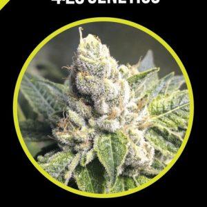 cbd-blueberry-420
