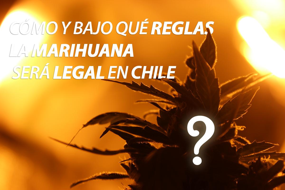 como-reglas-marihuana-legal-chile