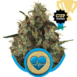 medical-mass-medicinal-cbd