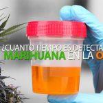 insta-marihuana-examen-orina