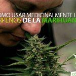 usar-medicinalmente-terpenos-de-la-marihuana