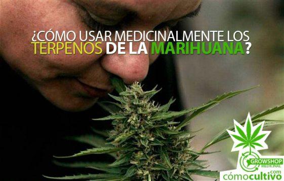 ¿Cómo usar medicinalmente los terpenos de la marihuana?