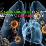 insta-cannabinoides-destruyen-cancer-1974