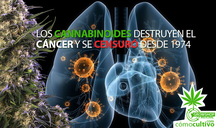 insta-cannabinoides-destruyen-cancer-1974