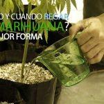 insta-como-cuando-regar-la-marihuana-mejor-forma