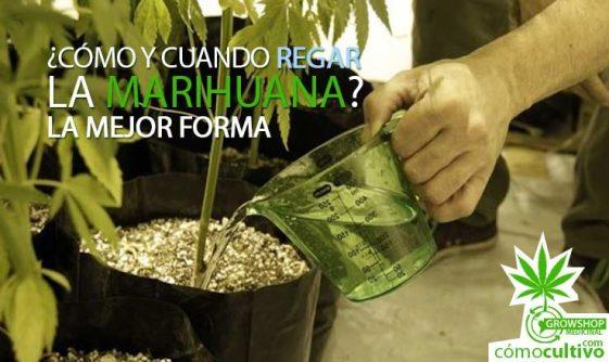 ¿Cómo y cuando regar la marihuana? La mejor forma