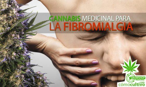 Cannabis medicinal para la fibromialgia