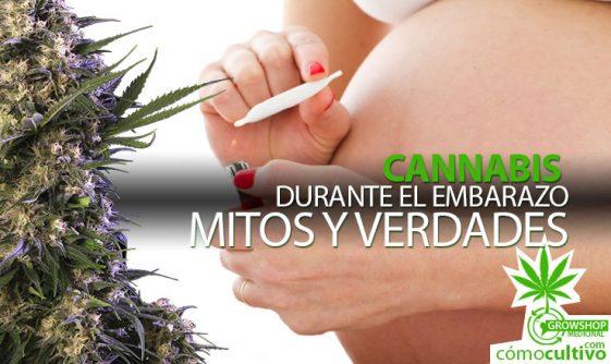 Cannabis durante el Embarazo: Mitos y Verdades