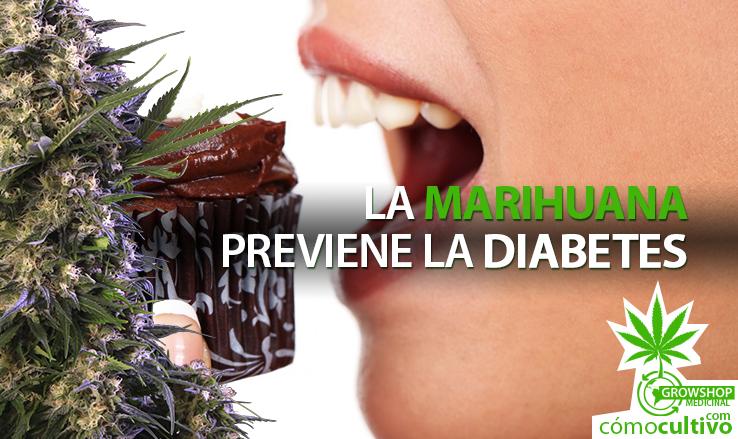 insta-marihuana-previene-la-diabetes