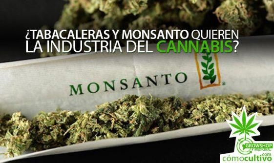 ¿Tabacaleras y Monsanto quieren la industria del Cannabis?