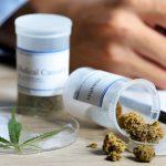cultivo de marihuana no es ilegal