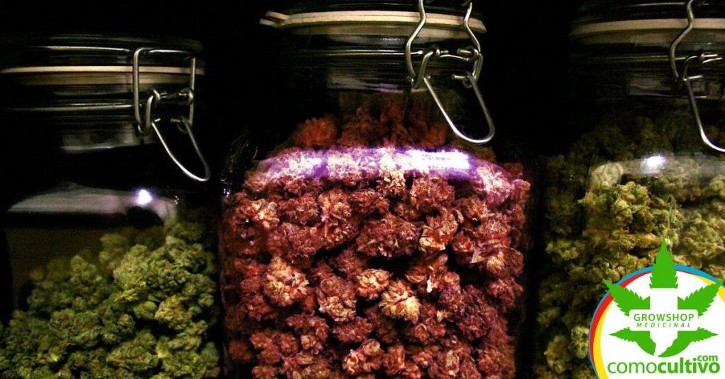 Secar y curar la marihuana