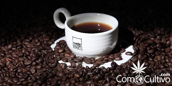 Es Verdad Que La Cafeína Mejora La Memoria Qué Dice La Ciencia