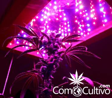 leds-cultivo-marihuana-cannabis-experiencia-natural
