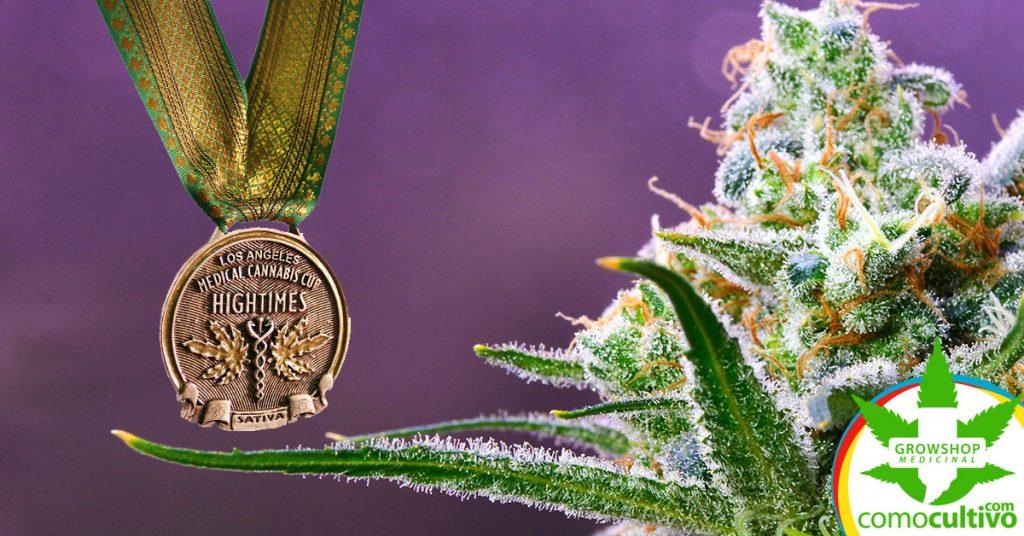 razas de marihuana más premiadas