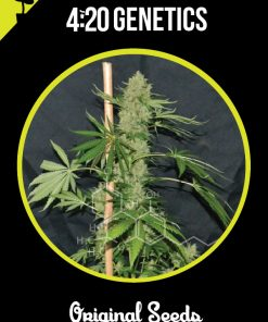 semillas white widow