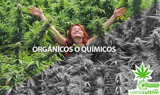 Fertilizantes Orgánicos o Químicos ¿Cuál usar para la Cannabis?
