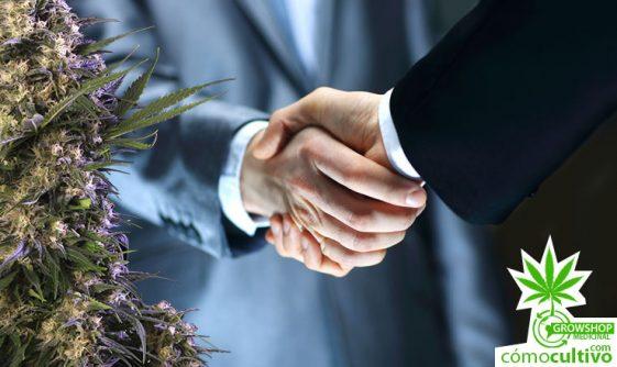 El Lobby tras la prohibición del Fármaco Gratuito de Cannabis