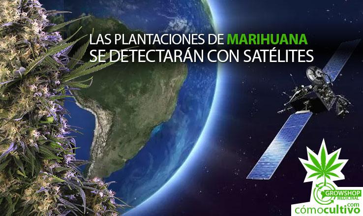 Las plantaciones de marihuana se detectar n con sat lites en chile - Plantaciones de marihuana interior ...
