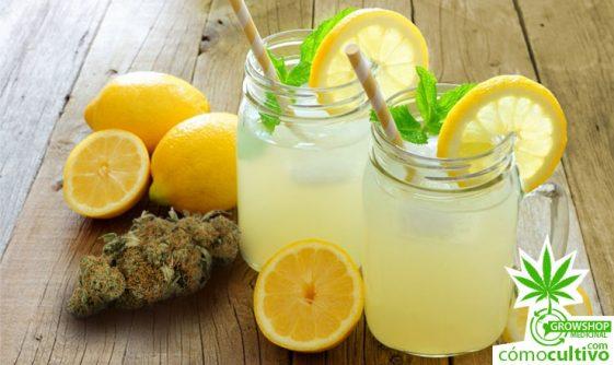 ¿Cómo hacer una refrescante limonada de cannabis?