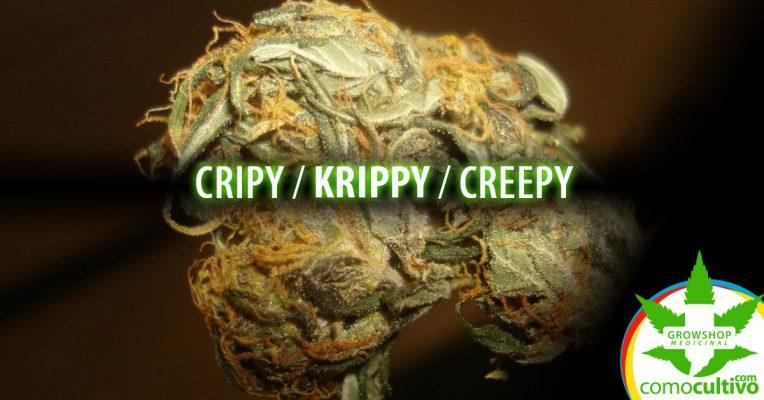 cripy