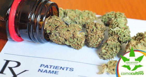 Alemania pagará los tratamientos con Cannabis de sus ciudadanos