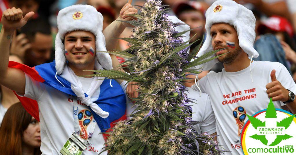 ingresar marihuana