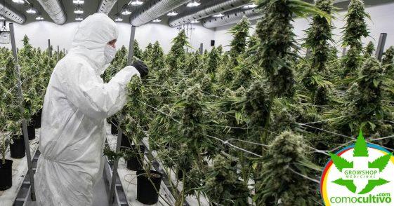 ¿Estudiarías en la Universidad el uso terapeútico del cannabis? ¡Es posible!