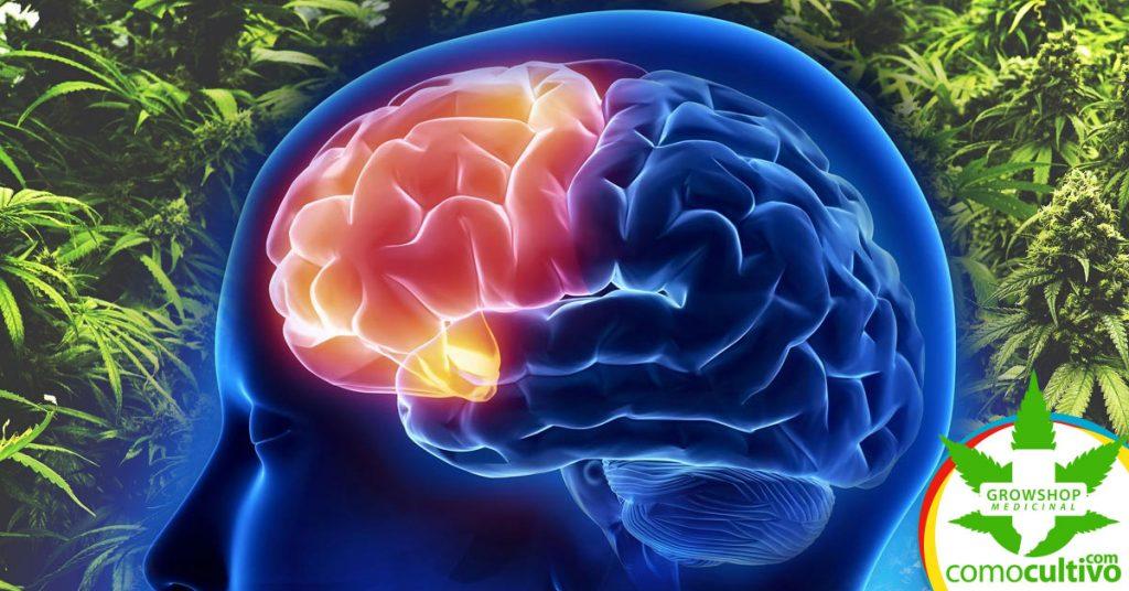 la cannabis mejora el rendimiento cognitivo