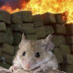 Policías culpan a ratones