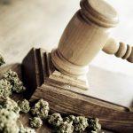 usuarios medicinales de cannabis