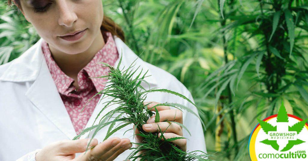 THC puede inhibir el crecimiento del cáncer