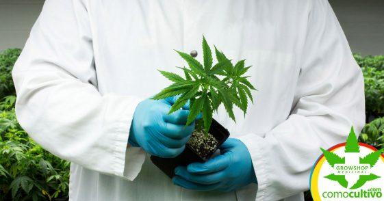 Las autoridades sanitarias aprueban un extracto de cannabis rico en CBD para el tratamiento de la epilepsia