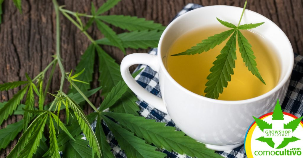 té de cannabis