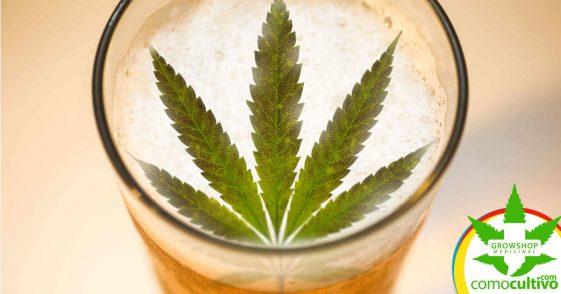 """Cerveza de marihuana con un efecto que """"Te golpea mucho más rápido"""""""