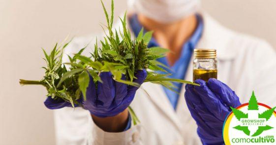Municipalidad entregará medicamento de Cannabis a pacientes chilenos
