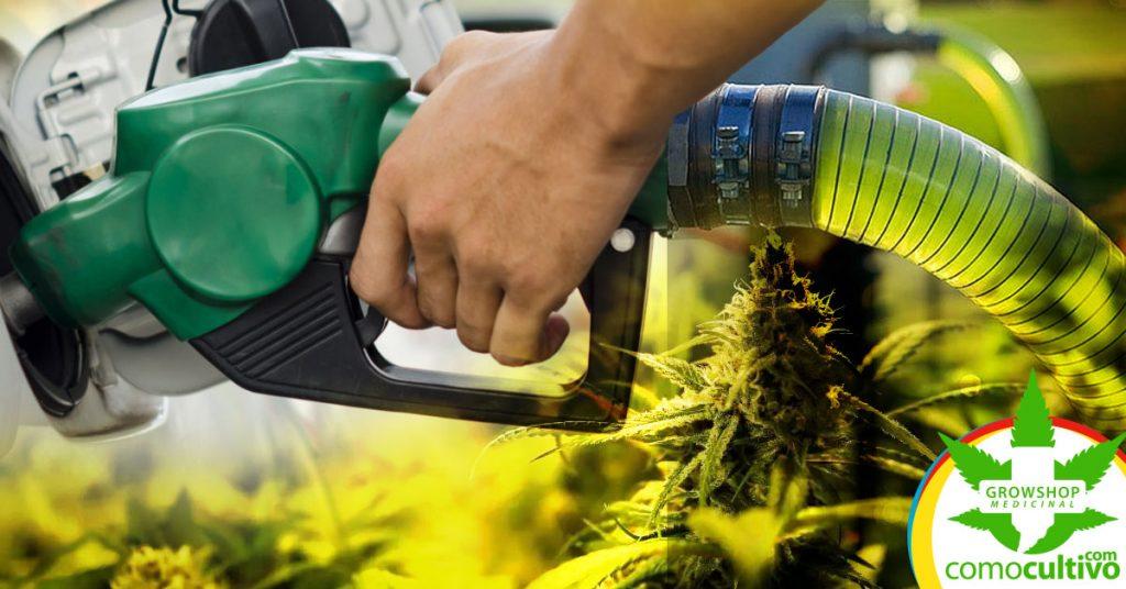 Biocombustible de cáñamo