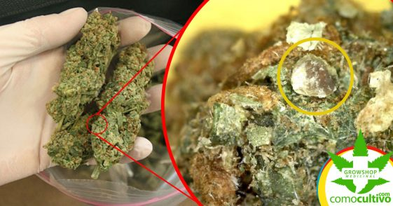 Marihuana contaminada ¿Qué estas consumiendo cuando no autocultivas?