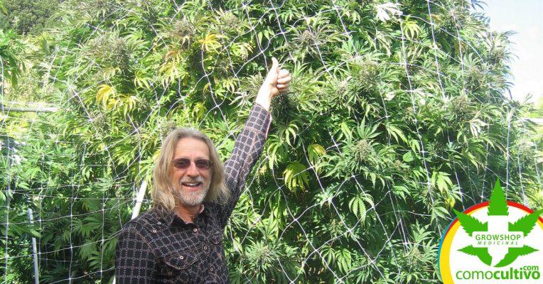 Cannabis diaria en la vejez
