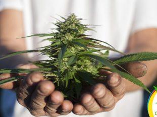 aprobada la Ley Cultivo Seguro