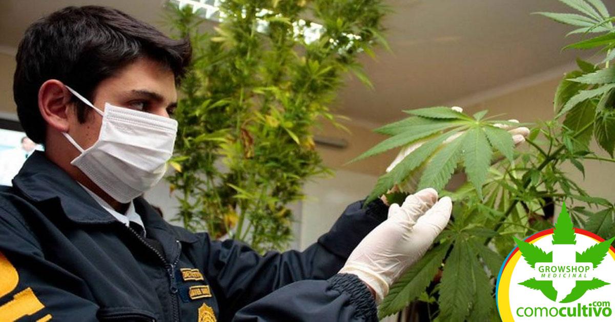 detenciones a los usuarios medicinales de cannabis
