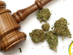 amparos para consumo de marihuana