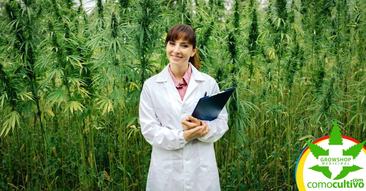 cannabis solo las cancerosas
