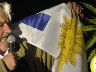 Uruguay marihuana legal